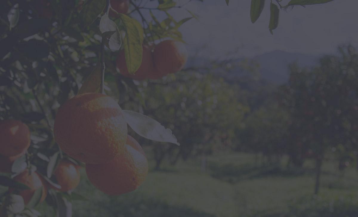 banner-oranges_mobile